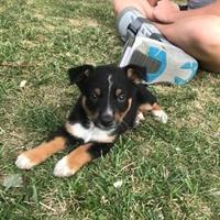 Adopt A Pet :: Linus - Brandon, SD