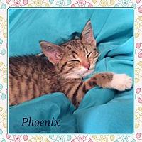 Adopt A Pet :: PHOENIX - Winnipeg, MB