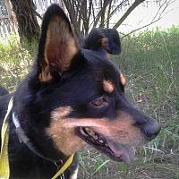 Adopt A Pet :: Buddy - Palmyra, NE