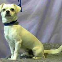 Adopt A Pet :: Otis Bono - Seattle, WA