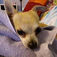 Adopt A Pet :: Rocco - Van Nuys, CA