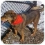 Photo 4 - Shepherd (Unknown Type)/Rottweiler Mix Dog for adoption in Huntington, New York - Sabrina