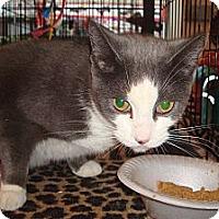 Adopt A Pet :: Hope - Brooklyn, NY