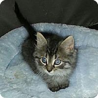 Adopt A Pet :: Zsa Zsa - Whitestone, NY