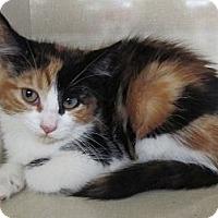 Adopt A Pet :: Crocus - Riverhead, NY