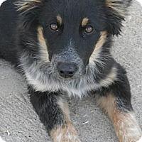 Adopt A Pet :: Mickey #5218 - Jerome, ID