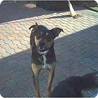 Adopt A Pet :: OSO - dewey, AZ