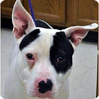 Adopt A Pet :: Rascal - Claypool, IN