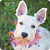 Adopt A Pet :: Bruno - Kingwood, TX