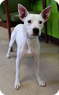 Terrier (Unknown Type, Medium) Mix Dog for adoption in Adrian, Michigan - Ellie