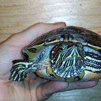 Adopt A Pet :: Justin - Pefferlaw, ON