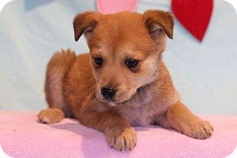 Shepherd (Unknown Type) Mix Puppy for adoption in Waldorf, Maryland - Odessa