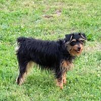 Adopt A Pet :: Jasmine - Rock Hill, SC