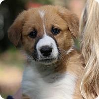 Adopt A Pet :: Rio - Minneapolis, MN