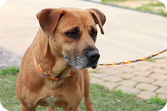 Hound (Unknown Type) Mix Dog for adoption in Greensboro, North Carolina - Sandy