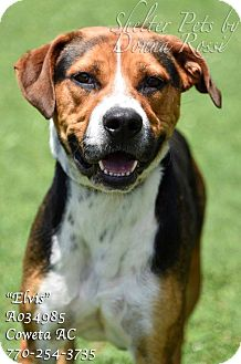 Foxhound Mix Dog for adoption in Newnan City, Georgia - Elvis