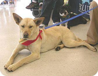 German Shepherd Dog/Husky Mix Dog for adoption in Cantonment, Florida - Princess