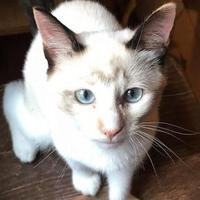 Adopt A Pet :: Gamora (Mag7 kit 4) - McDonough, GA