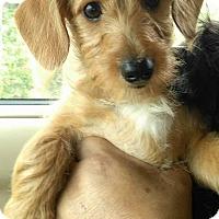 Adopt A Pet :: Petaka - El Cajon, CA