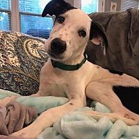 Adopt A Pet :: Jordan - Alpharetta, GA