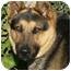 Photo 3 - German Shepherd Dog/Husky Mix Dog for adoption in Los Angeles, California - Lucky von Lagerhof