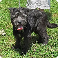 Adopt A Pet :: Bruce - Kingwood, TX