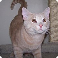 Adopt A Pet :: Moose - Colorado Springs, CO