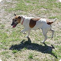 Adopt A Pet :: KARI - Scottsdale, AZ