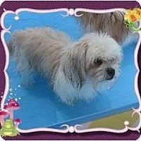 Adopt A Pet :: Buggs - San Angelo, TX