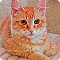 Adopt A Pet :: Tom Sawyer - Escondido, CA