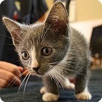 Adopt A Pet :: Omelet - Secaucus, NJ