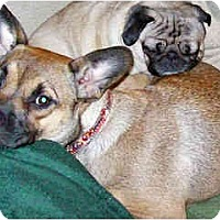 Adopt A Pet :: Lucy - courtesy post - Scottsdale, AZ