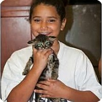 Adopt A Pet :: Grem - Mobile, AL