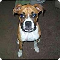 Adopt A Pet :: Ladybug - Brunswick, GA