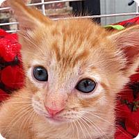 Adopt A Pet :: Don - Brooklyn, NY