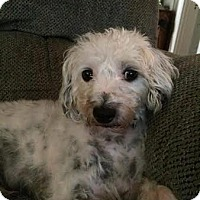 Adopt A Pet :: Barney~Adopted! - Troy, OH