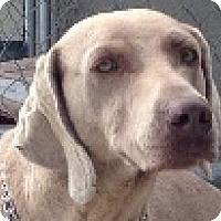 Adopt A Pet :: Nala - Sun Valley, CA