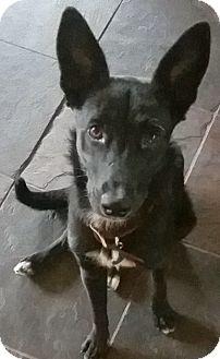 Shepherd (Unknown Type) Mix Dog for adoption in Tucson, Arizona - Maisey