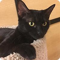 Adopt A Pet :: Coco - Winchester, CA