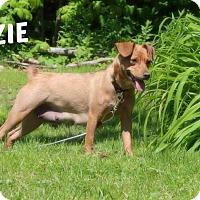 Adopt A Pet :: Suzie - Salamanca, NY