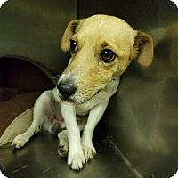 Adopt A Pet :: Jasper - Columbus, GA