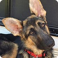 Adopt A Pet :: Danae von Dannau - Los Angeles, CA