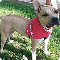 Adopt A Pet :: Mindy - Chester Springs, PA