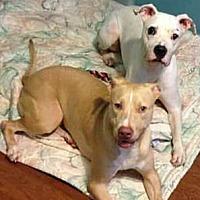 Adopt A Pet :: Sonya & Storm - Jacksonville, FL