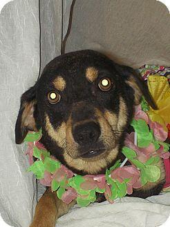 Terrier (Unknown Type, Medium) Mix Dog for adoption in Vernon Hills, Illinois - Kira