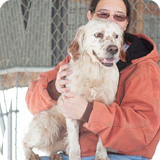 Brittany Mix Dog for adoption in New Martinsville, West Virginia - Ellie