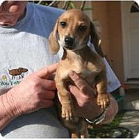 Adopt A Pet :: Corky - Garden Grove, CA