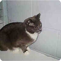Adopt A Pet :: Kelly - Mission, BC