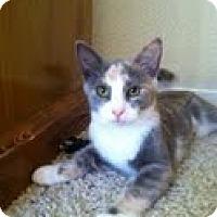 Adopt A Pet :: Callie - Modesto, CA