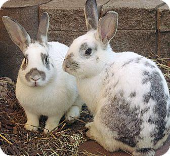 Rhinelander Mix for adoption in Santa Barbara, California - Kelsey & Jordon